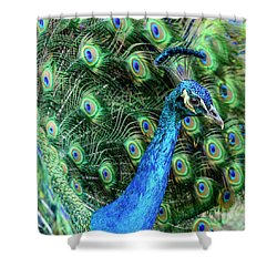 Shower Curtain featuring the photograph Peacock by Steven Sparks