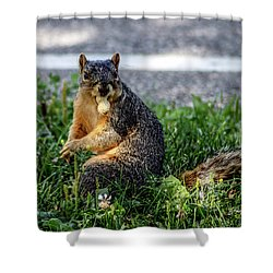 Shower Curtain featuring the photograph Peanut by Joann Copeland-Paul