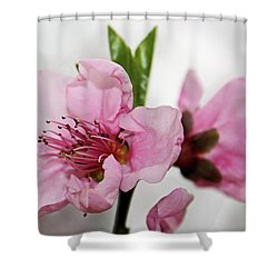 Shower Curtain featuring the photograph Plum Blossom by Kristin Elmquist