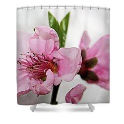 Plum Blossom Shower Curtain by Kristin Elmquist