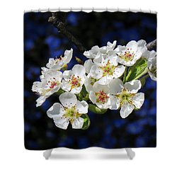 Shower Curtain featuring the photograph Pear Blossoms And Georgia Blue 1 by Brooks Garten Hauschild