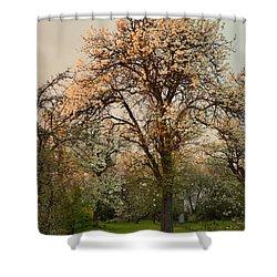 Pear Spring Sunrise Shower Curtain by Henryk Gorecki