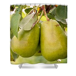 Pears In The Tree Shower Curtain by Teri Virbickis