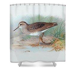 Pectoral Sandpiper Shower Curtain
