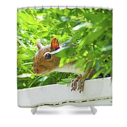 Peek-a-boo Gray Squirrel Shower Curtain by Kathy Kelly