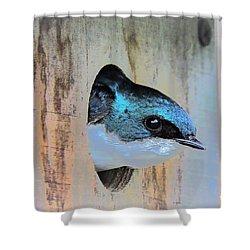 Peek-a-blue Shower Curtain