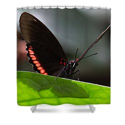 Peek-a-boo 8x10 Shower Curtain