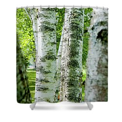 Shower Curtain featuring the photograph Peek A Boo Birch by Greg Fortier