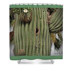 Peek-a-boo Cactus Wren Shower Curtain