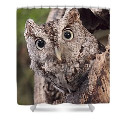 Shower Curtain featuring the photograph Peek A Boo by Cheri McEachin