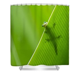 Shower Curtain featuring the photograph Peek A Boo Gecko by Christina Lihani