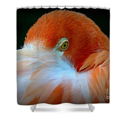 Shower Curtain featuring the photograph Peek-a-boo by Lisa L Silva