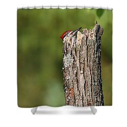 Peek A Boo Pileated Woodpecker Shower Curtain