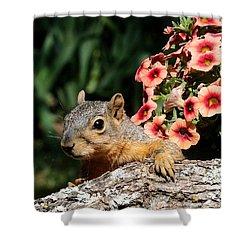 Peek-a-boo Squirrel Shower Curtain