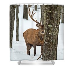 Shower Curtain featuring the photograph Peekaboo.. by Nina Stavlund