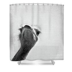 Peekaboo Ostrich Shower Curtain