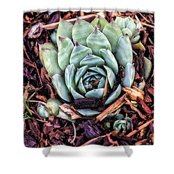 Peekaboo Succulent Shower Curtain
