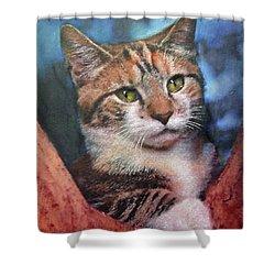 Peekaboo Tabby Shower Curtain