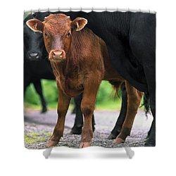 Peeking Calf  Shower Curtain by Sally Weigand