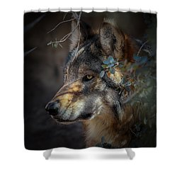 Peeking Out From The Shadows Shower Curtain by Elaine Malott