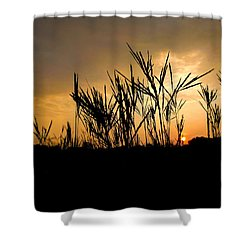 Peeking Out Shower Curtain by Tim Good