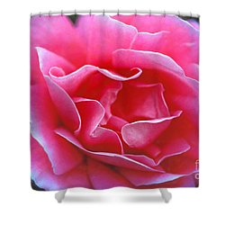 Shower Curtain featuring the photograph Peggy Lee Rose Bridal Pink by David Zanzinger