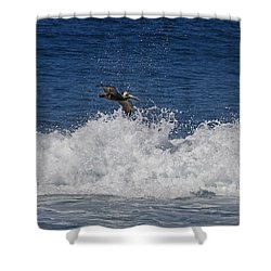 Pelican And Waves Shower Curtain
