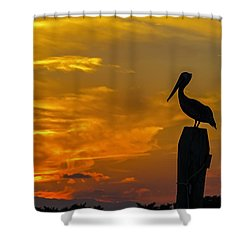 Pelican At Silver Lake Sunset Ocracoke Island Shower Curtain