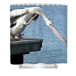 Pelican Beauty 66633 Shower Curtain