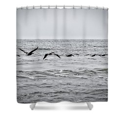 Pelican Black And White Shower Curtain