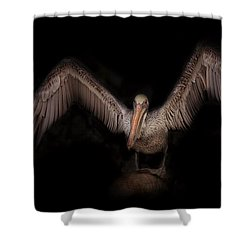 Shower Curtain featuring the photograph Pelican  by Brian Cross