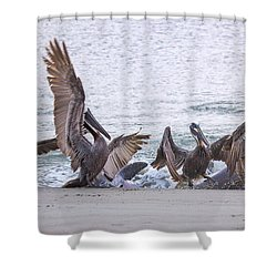 Pelican Brunch Shower Curtain