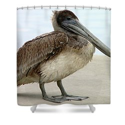 Pelican Close-up Shower Curtain by Al Powell Photography USA