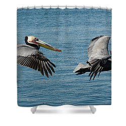 Pelican Duo Shower Curtain