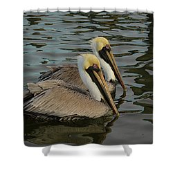 Pelican Duo Shower Curtain by Jean Noren