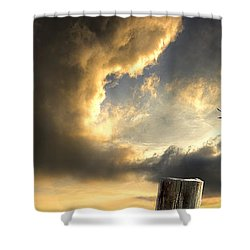 Pelican Evening Shower Curtain by Meirion Matthias