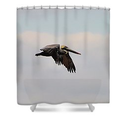 Pelican Flight Shower Curtain by Al Powell Photography USA