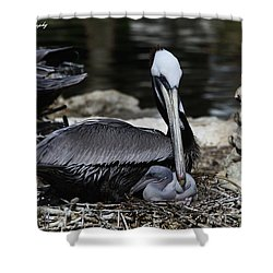 Pelican Hug Shower Curtain