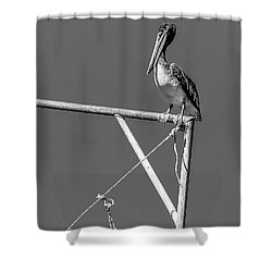 Pelican In Black And White Shower Curtain by Andy Crawford