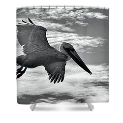 Pelican In Flight Shower Curtain by AJ Schibig