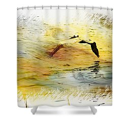 Pelican In Flight Shower Curtain