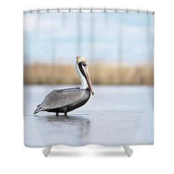 Pelican In Paradise Shower Curtain