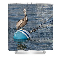 Pelican On A Buoy Shower Curtain