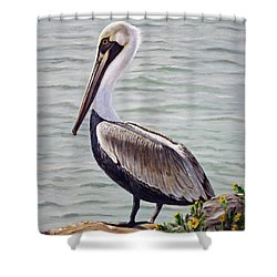 Pelican On The Waterway Shower Curtain