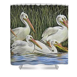 Pelican Parade Shower Curtain