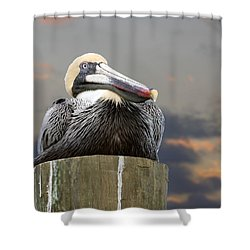 Pelican Perch Shower Curtain