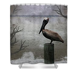 Pelican Perch,ocean,sarasota, Shower Curtain