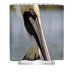 Pelican Portrait Shower Curtain by Sally Weigand
