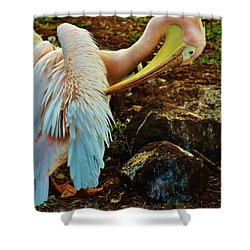 Shower Curtain featuring the photograph Pelican Preening by Craig Wood