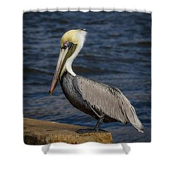 Pelican Profile 2 Shower Curtain by Jean Noren